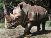 fotos-de-rinoceronte-11