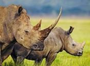 fotos-de-rinoceronte-12