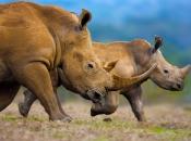 fotos-de-rinoceronte-13