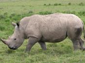 fotos-de-rinoceronte-14