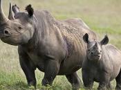 fotos-de-rinoceronte-15