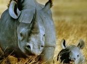 fotos-de-rinoceronte-16