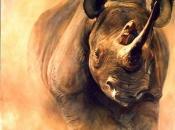 fotos-de-rinoceronte-17