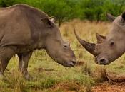 fotos-de-rinoceronte-18