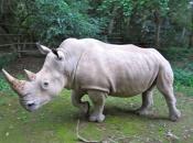 fotos-de-rinoceronte-2
