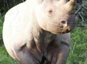fotos-de-rinoceronte-3