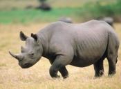 fotos-de-rinoceronte-5