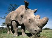 fotos-de-rinoceronte-7