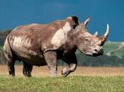 fotos-de-rinoceronte-8