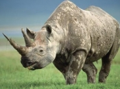 fotos-de-rinoceronte-9