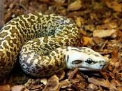 serpentes-10