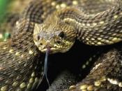 serpentes-12