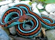serpentes-13