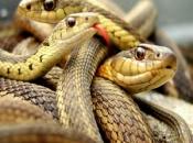serpentes-2