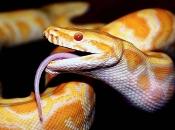 serpentes-3