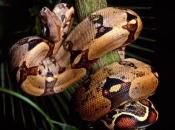 serpentes-5