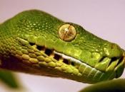 serpentes-7
