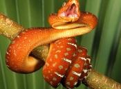 serpentes-9