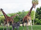 Socialização da Girafa 2