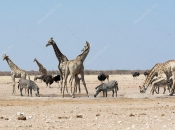Socialização da Girafa 3