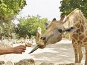 Socialização da Girafa 5