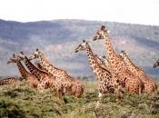 Socialização da Girafa 6