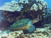 Fotos de Tartarugas-marinhas 8