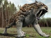 Tigre Dente de Sabre 3