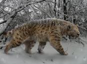 Tigre Dente de Sabre 6