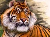 tigre-do-caspio-7