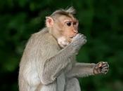 Tipos de Primatas 1