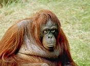 Tipos de Primatas 2