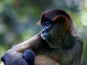 Tipos de Primatas 3