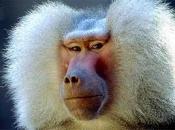 Tipos de Primatas 4