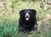 Urso-Beiçudo5