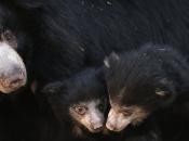 Urso-Beiçudo6