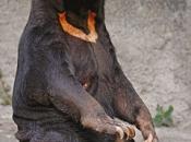 Urso-Malaio 1