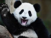 Urso-Panda 4