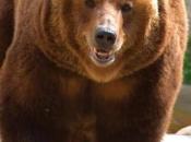 Urso-Pardo1