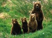 Urso-Pardo4
