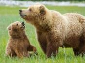 Urso-Pardo5