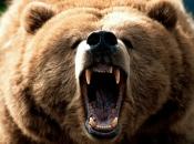 Urso Pardo 3