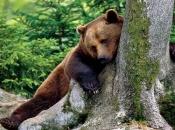 Urso Pardo 5