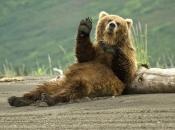 Urso Pardo 6