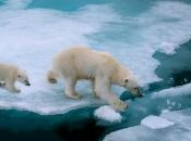 Urso-Polar4