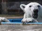 Urso Polar 3