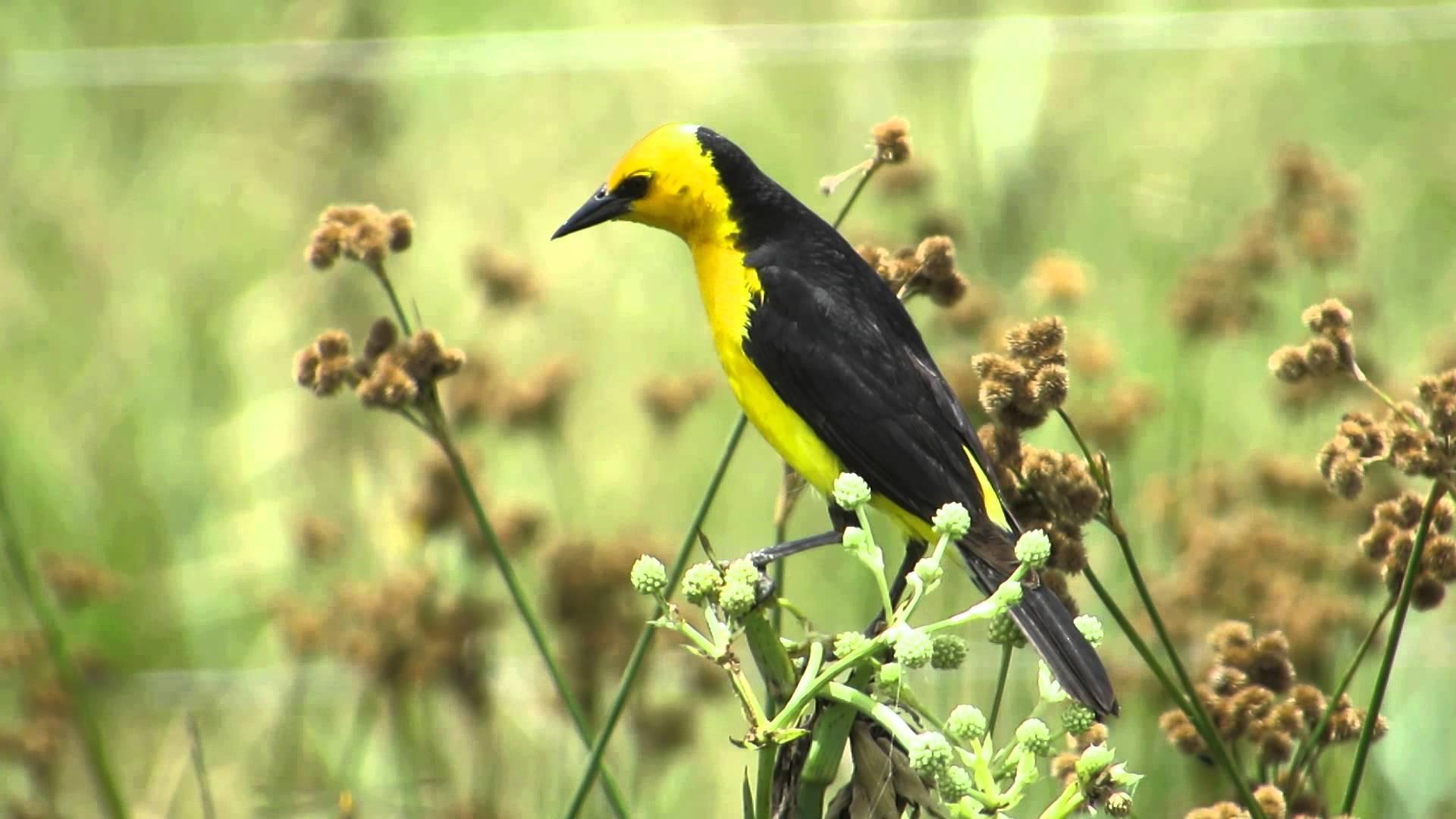 Veste-Amarela 1