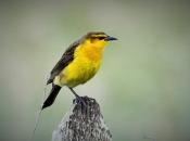 Veste-Amarela 3