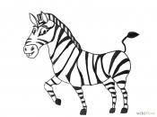 curiosidades-da-zebra-7