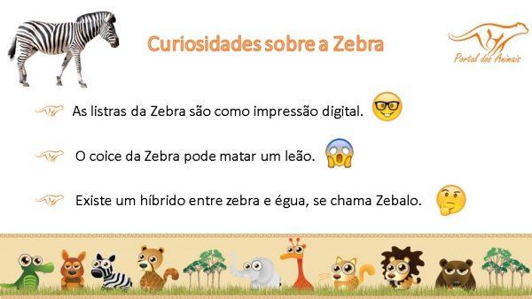 Curiosidades da Zebra